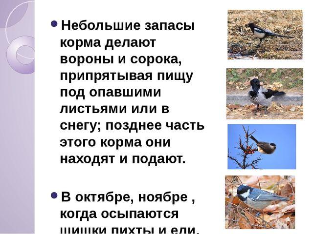 Небольшие запасы корма делают вороны и сорока, припрятывая пищу под опавшими...