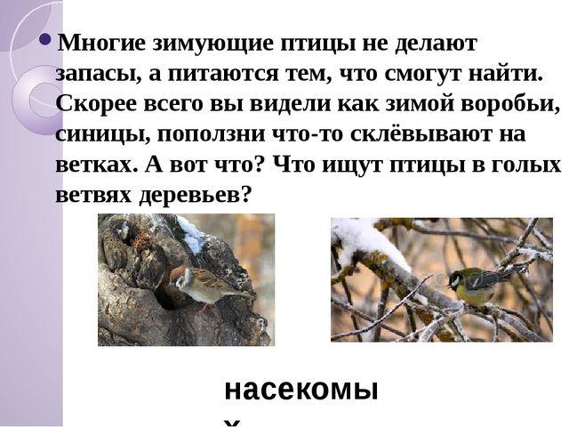 Многие зимующие птицы не делают запасы, а питаются тем, что смогут найти. Ск...