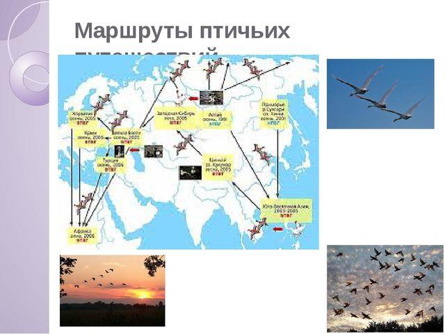 Маршруты птичьих путешествий