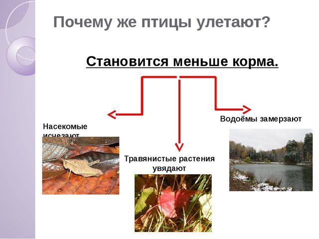 Почему же птицы улетают? Становится меньше корма. Насекомые исчезают Травянис...