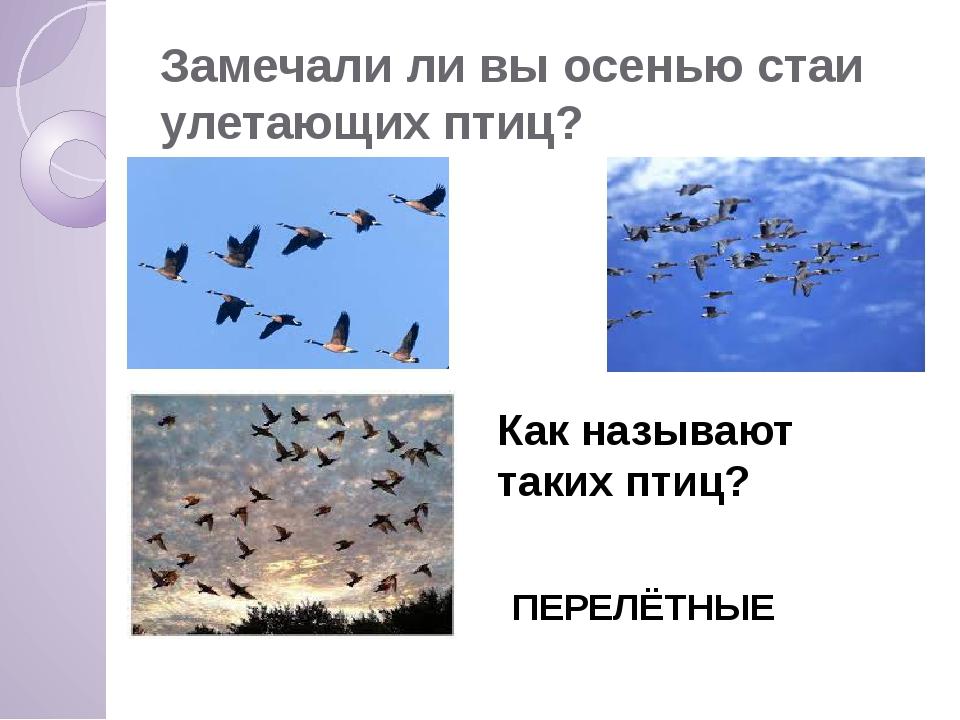 Замечали ли вы осенью стаи улетающих птиц? Как называют таких птиц? ПЕРЕЛЁТНЫЕ