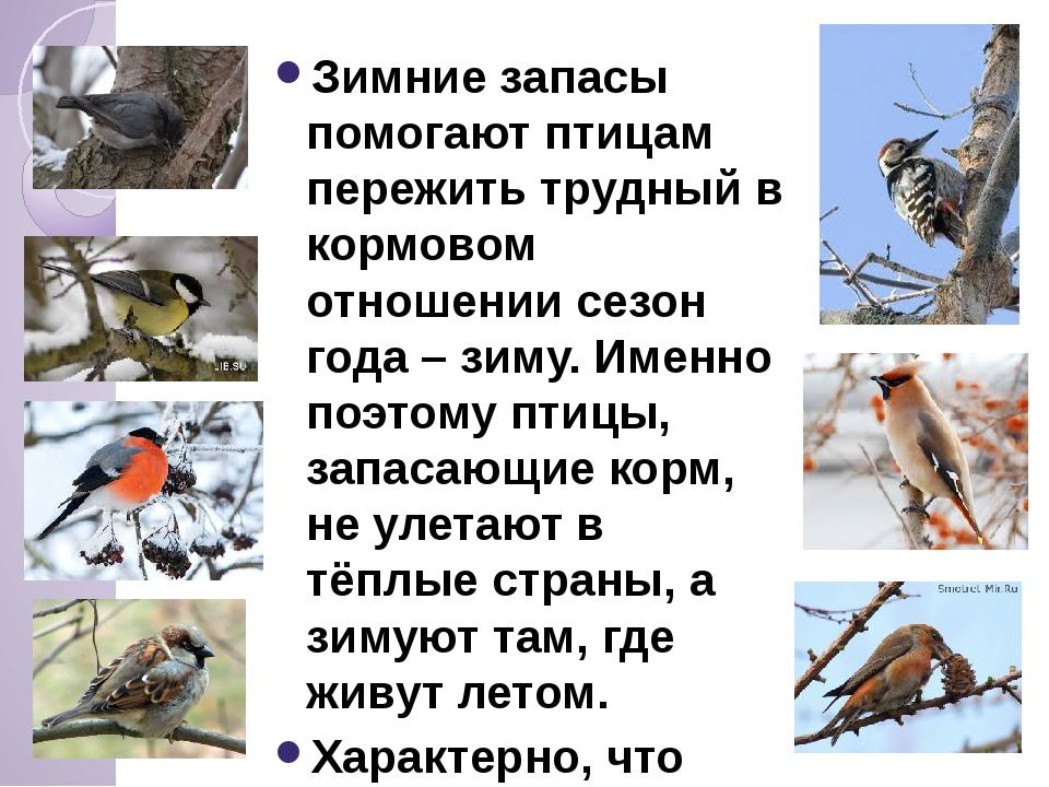 Зимние запасы помогают птицам пережить трудный в кормовом отношении сезон го...