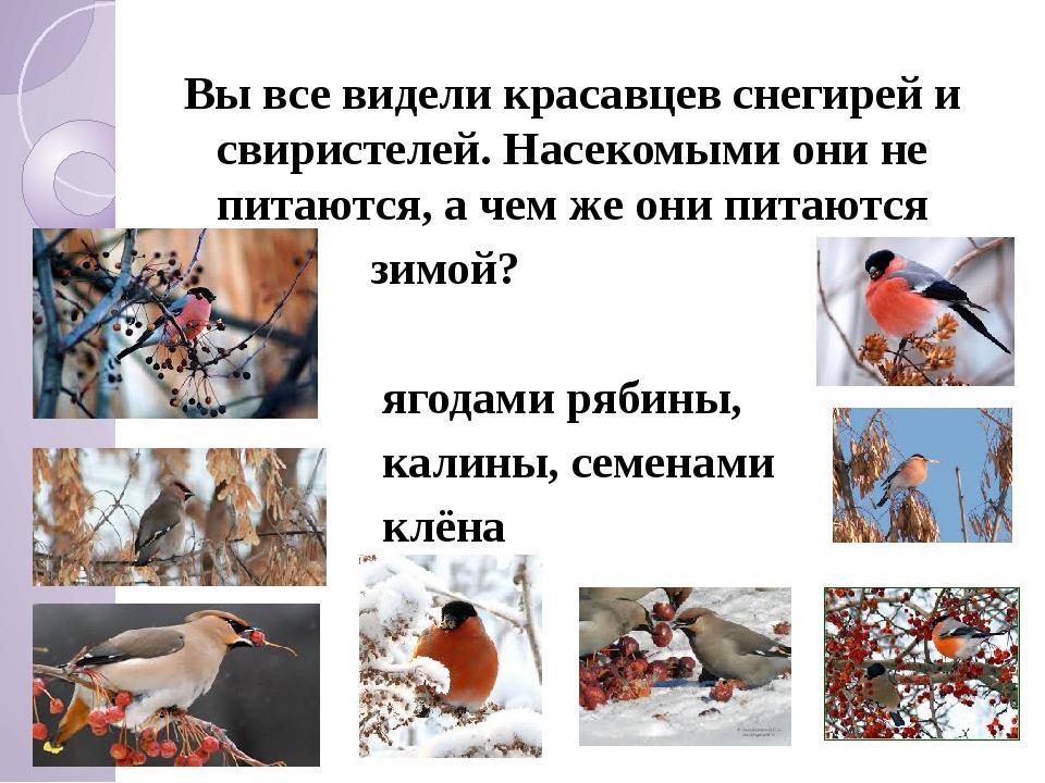 Вы все видели красавцев снегирей и свиристелей. Насекомыми они не питаются,...