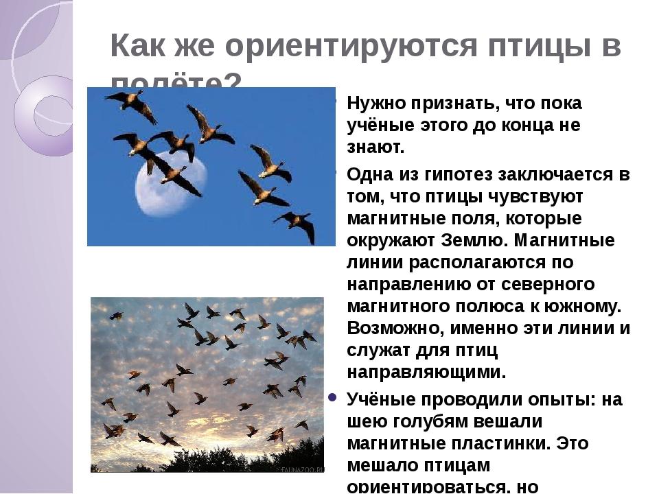 Как же ориентируются птицы в полёте? Нужно признать, что пока учёные этого до...