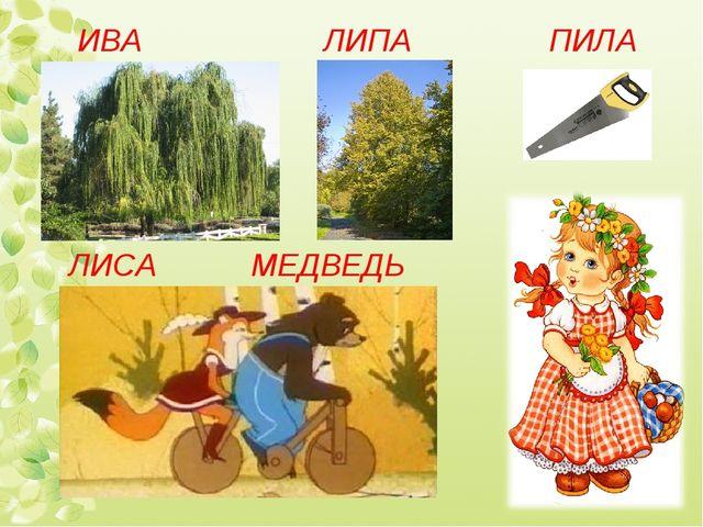 ИВА ЛИПА ЛИСА МЕДВЕДЬ ПИЛА