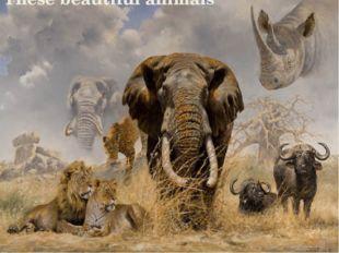 These beautiful animals Заголовок фотоальбома Щелкните, чтобы добавить дату