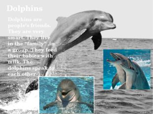 Dolphins Dolphins are people's friends. They are very smart. They live in the