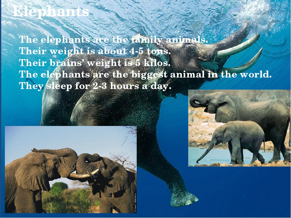 Elephants The elephants are the family animals. Their weight is about 4-5 ton...