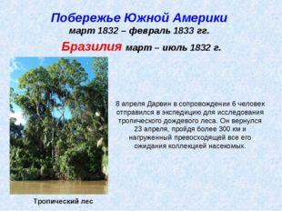 Побережье Южной Америки март 1832 – февраль 1833 гг. Тропический лес Бразилия