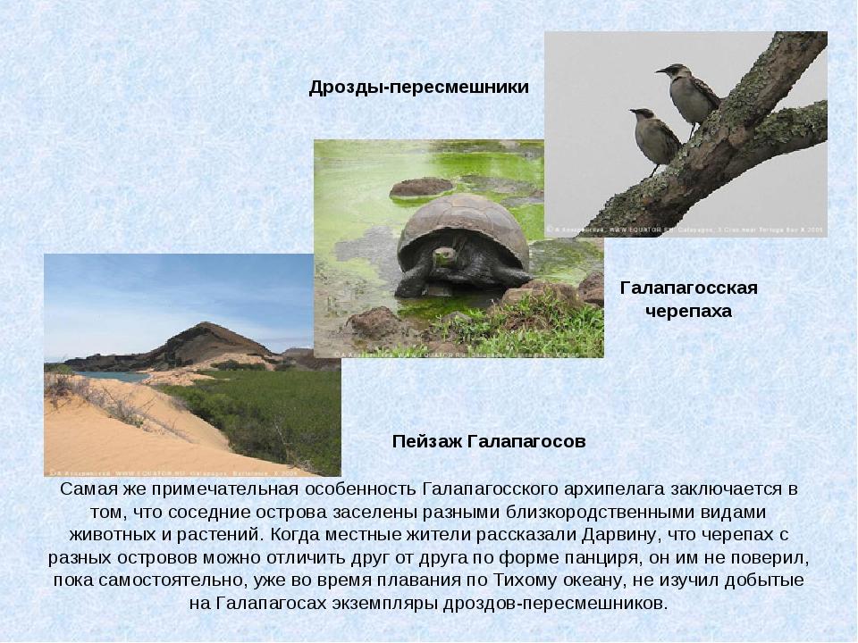 Галапагосская черепаха Пейзаж Галапагосов Дрозды-пересмешники Самая же примеч...