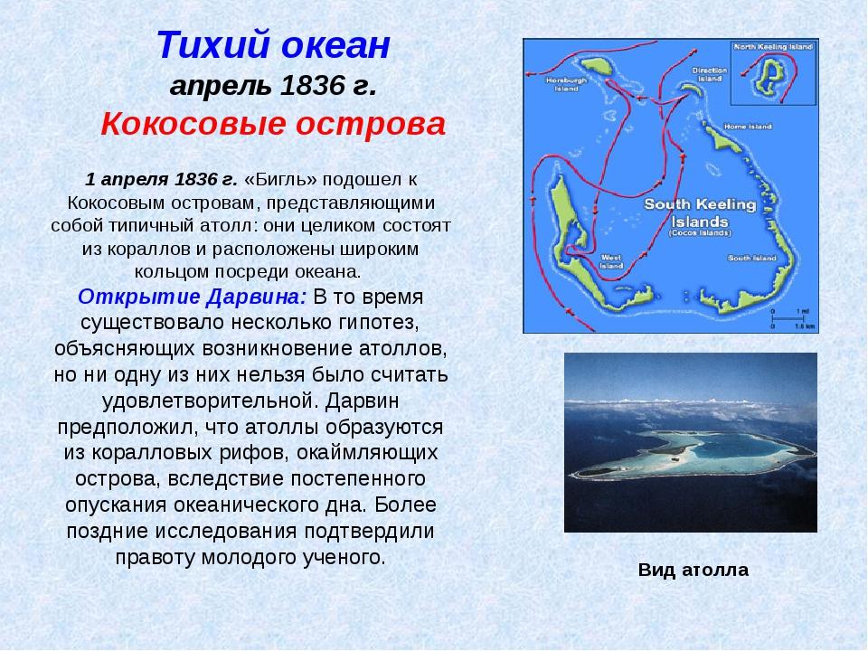 Тихий океан апрель 1836 г. Кокосовые острова 1 апреля 1836 г. «Бигль» подошел...