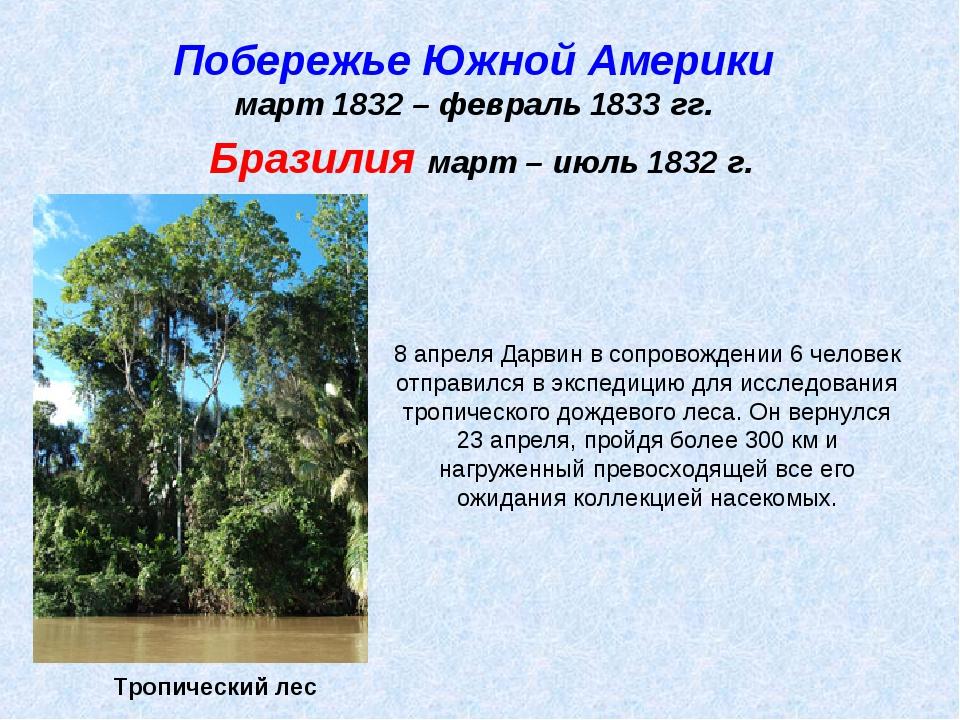 Побережье Южной Америки март 1832 – февраль 1833 гг. Тропический лес Бразилия...