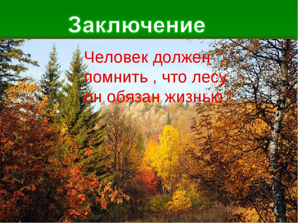 Человек должен помнить , что лесу он обязан жизнью !
