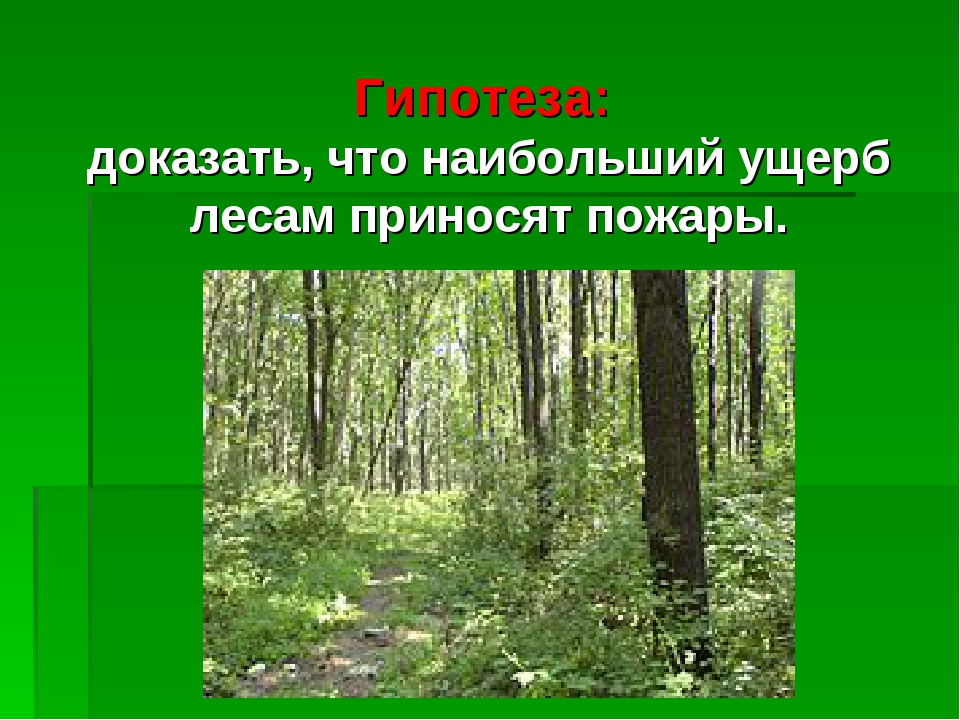 Гипотеза: доказать, что наибольший ущерб лесам приносят пожары.