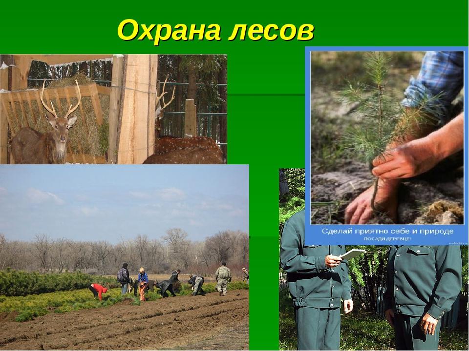Охрана лесов