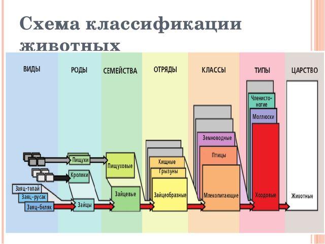 Схема классификации животных