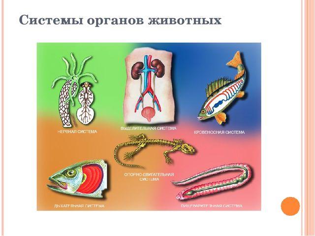 Системы органов животных