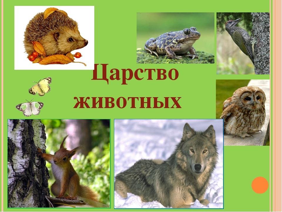 Царство животных  земля - уникальная планета