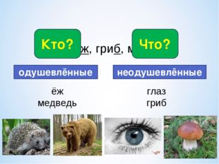 * Глаз, ёж, гриб, медведь. Кто? Что? одушевлённые неодушевлённые ёж медведь г