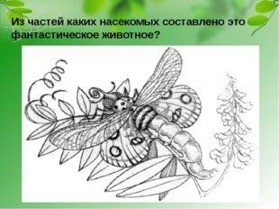Из частей каких насекомых составлено это фантастическое животное?
