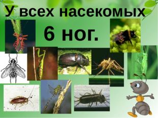 У всех насекомых 6 ног.