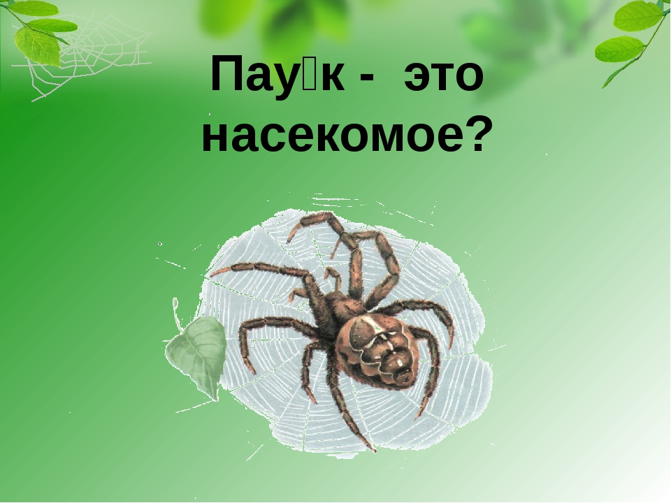 Паук - это насекомое?