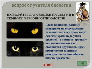 НАРИСУЙТЕ ГЛАЗА КОШКИ НА СВЕТУ И В ТЕМНОТЕ. ЧЕМ ОНИ ОТЛИЧАЮТСЯ? Глаза кошки