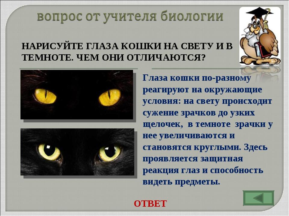 НАРИСУЙТЕ ГЛАЗА КОШКИ НА СВЕТУ И В ТЕМНОТЕ. ЧЕМ ОНИ ОТЛИЧАЮТСЯ? Глаза кошки...
