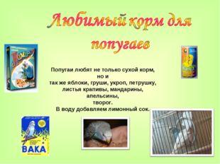 Попугаи любят не только сухой корм, но и так же яблоки, груши, укроп, петрушк