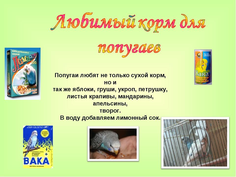 Попугаи любят не только сухой корм, но и так же яблоки, груши, укроп, петрушк...