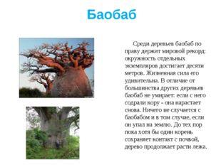 Баобаб Среди деревьев баобаб по праву держит мировой рекорд: окружность отдел