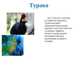 Турако (лат. Tauraco) - род птиц из семейства тураковых. Турако населяют преи