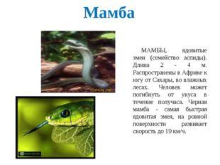 Мамба МАМБЫ, ядовитые змеи (семейство аспиды). Длина 2 - 4 м. Распространены