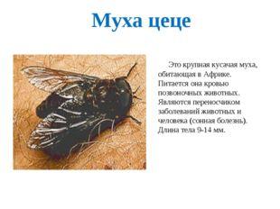 Муха цеце Это крупная кусачая муха, обитающая в Африке. Питается она кровью п