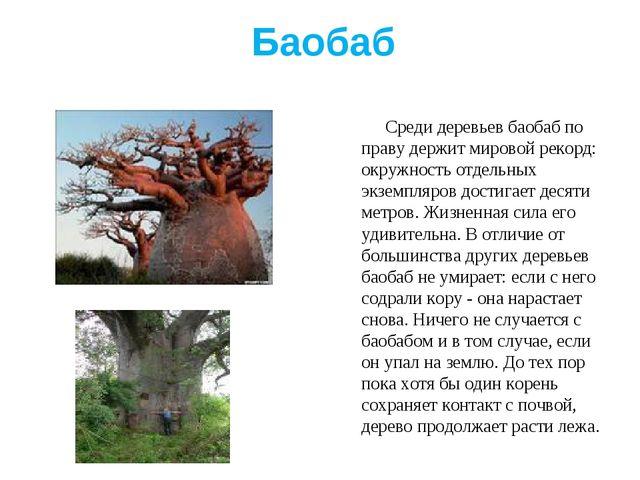 Баобаб Среди деревьев баобаб по праву держит мировой рекорд: окружность отдел...