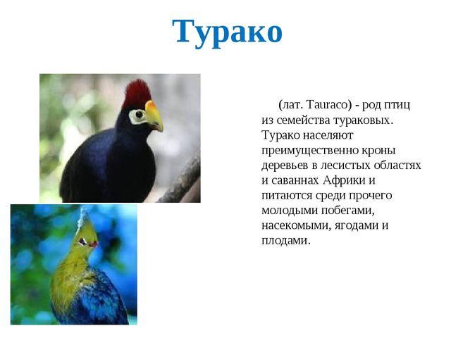Турако (лат. Tauraco) - род птиц из семейства тураковых. Турако населяют преи...