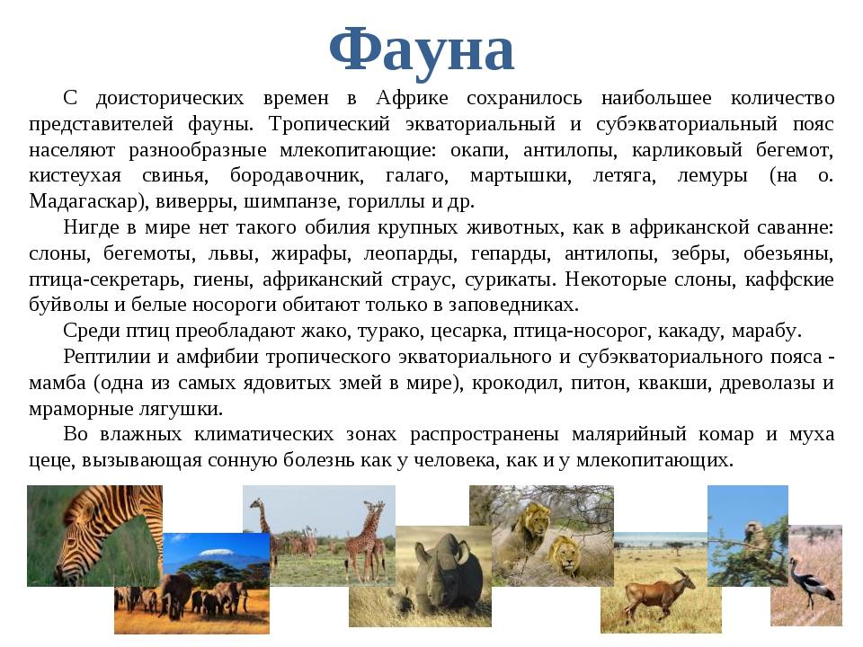 С доисторических времен в Африке сохранилось наибольшее количество представит...