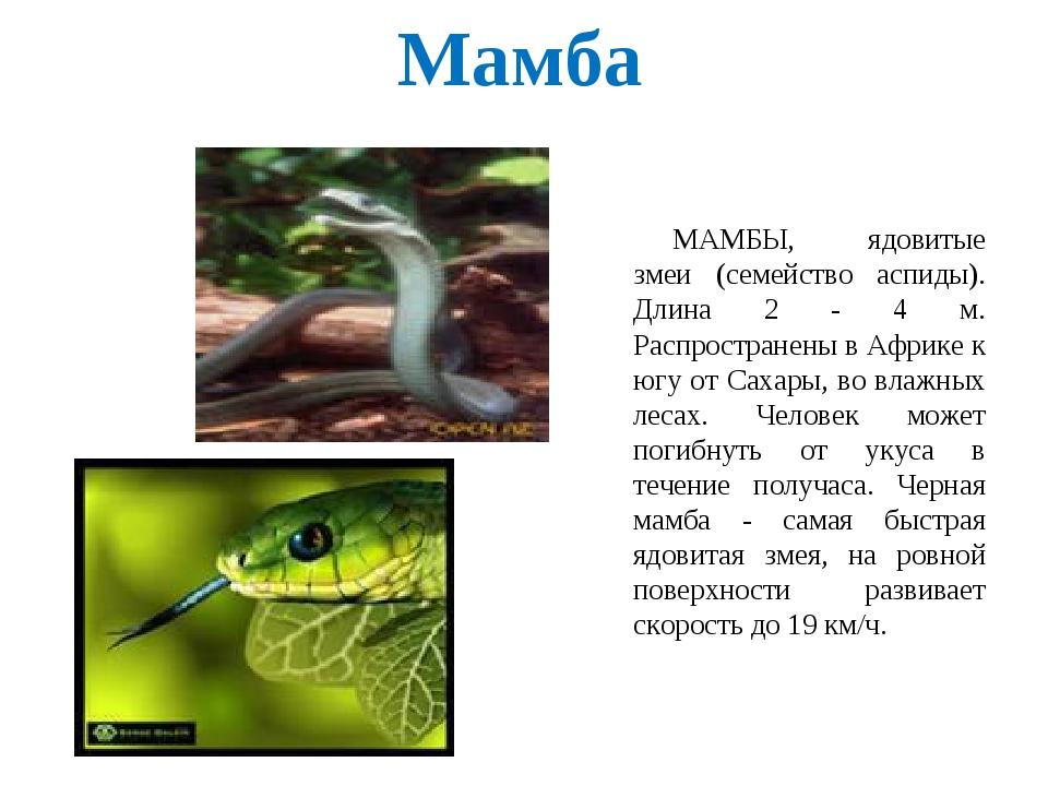Мамба МАМБЫ, ядовитые змеи (семейство аспиды). Длина 2 - 4 м. Распространены...