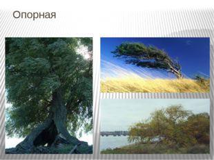 Опорная Шумят летом деревья в налетевшем теплом ветре, низко склоняют ветви,