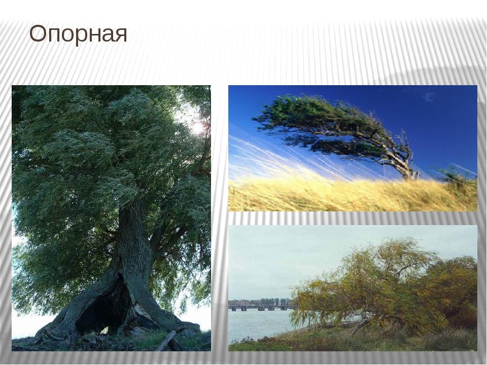 Опорная Шумят летом деревья в налетевшем теплом ветре, низко склоняют ветви,...