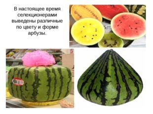 В настоящее время селекционерами выведены различные по цвету и форме арбузы.