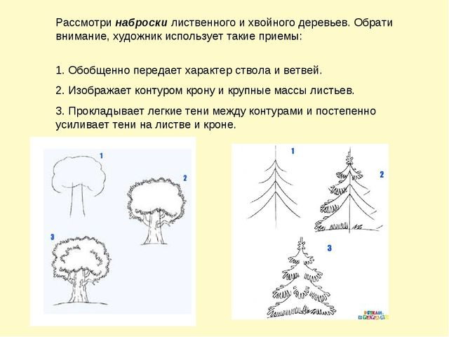 Задание по окружающему миру перспектива для 1 класса на тему генеологическое древо