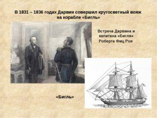 В 1831 – 1836 годах Дарвин совершил кругосветный вояж на корабле «Бигль» Встр