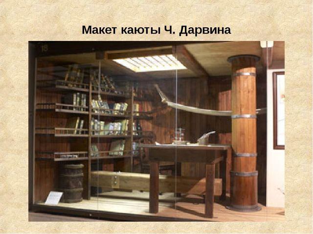 Макет каюты Ч. Дарвина