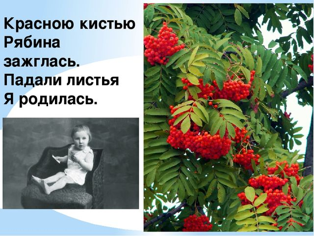 Красною кистью Рябина зажглась. Падали листья Я родилась.