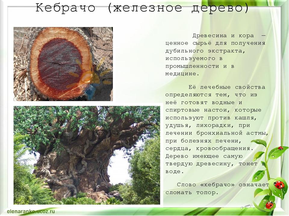 Кебрачо (железное дерево) Древесина и кора — ценное сырьё для получениядуби...