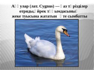 Аққулар (лат. Cygnus) — қаз тәрізділер отряды,үйрек тұқымдасының жеке туысына