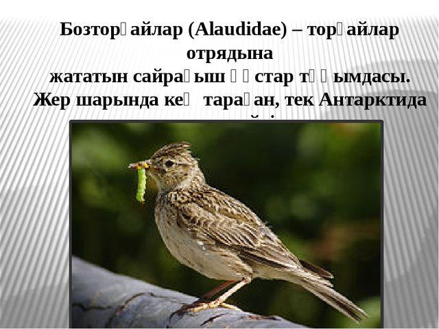 Бозторғайлар (Alaudіdae) – торғайлар отрядына жататын сайрағыш құстар тұқымда...