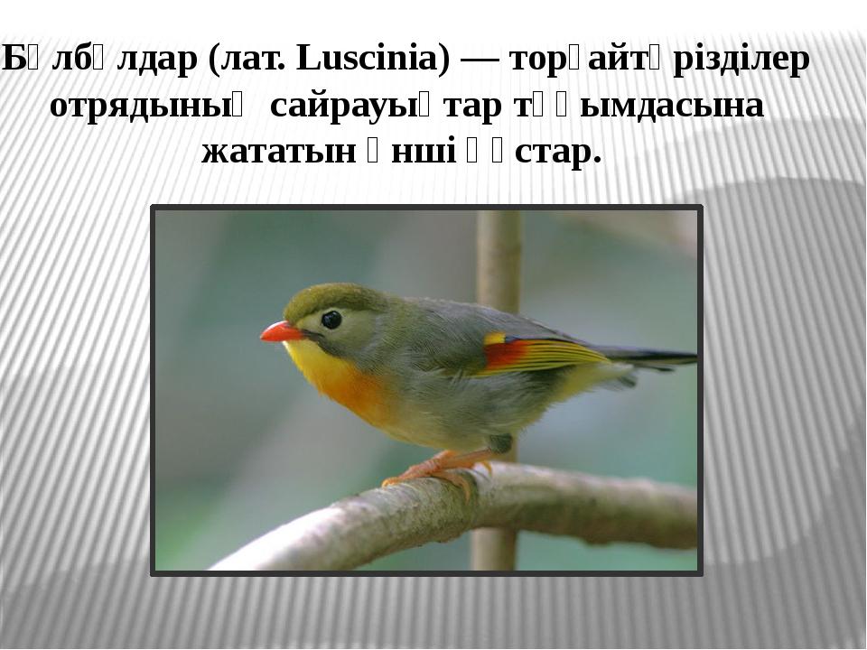 Бұлбұлдар (лат. Luscinia) — торғайтәрізділер отрядының сайрауықтар тұқымдасын...