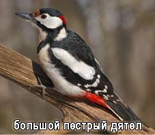hello_html_7631a3ec.jpg
